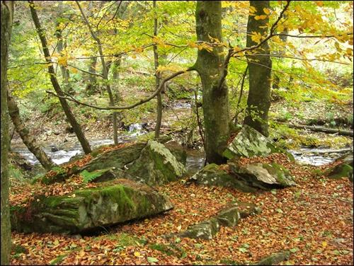 Gipfelbuch: Wildnis Trail in der Eifel