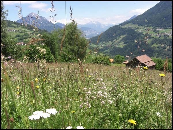 Blumenwiesen in Tirol E5 Alpenüberquerung