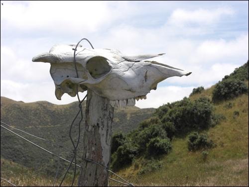 Skyline Trek Neuseeland