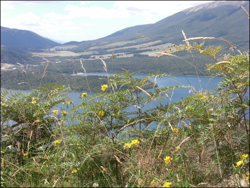 Wanderung Nelson Lakes National Park Neuseeland