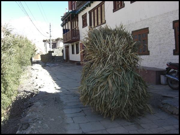 Grasträger Nepal