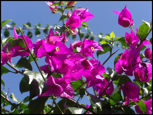 Blumen in Nepal