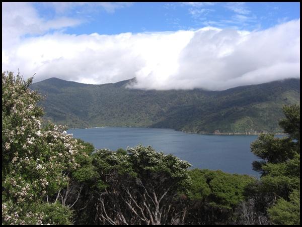Queen Charlotte Sound Neuseeland