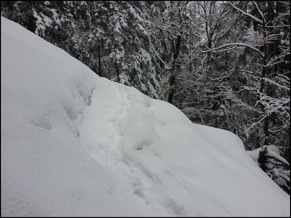 Spur im Schnee