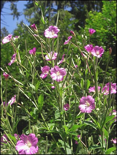 Blumenwiese in Bayern