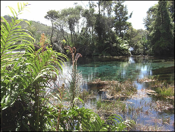 Wasser und Wald Golden Bay Neuseeland