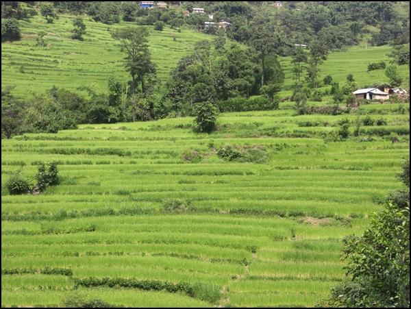 Grün in Nepal