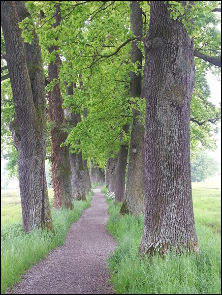 Allee in Murnau