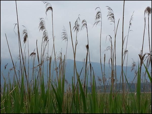Moor-Pflanzen