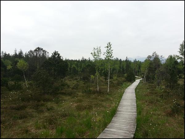 Bohlenweg durchs Moor