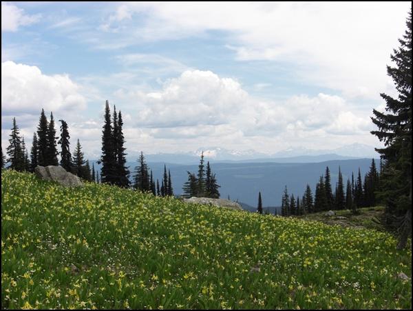 Blumenwiese Wells Gray Provincial Park