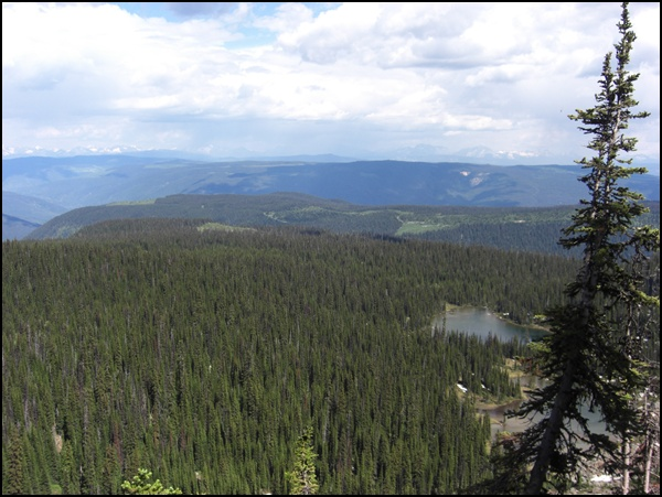 Wildnis Wells Gray Provincial Park