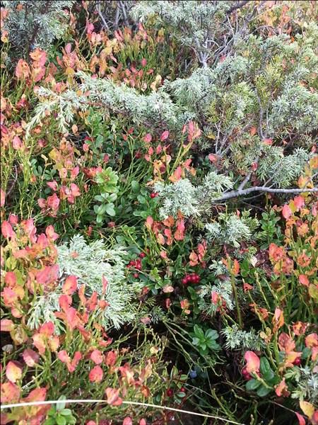 Herbst-Pflanzen in den Alpen