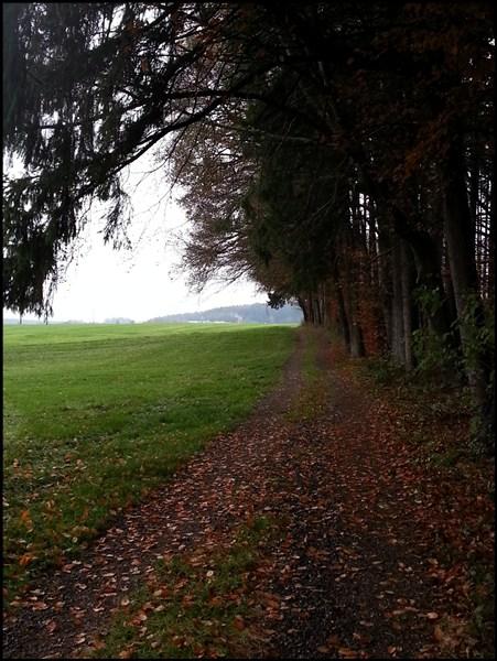 Waldrand bei Ebersberg