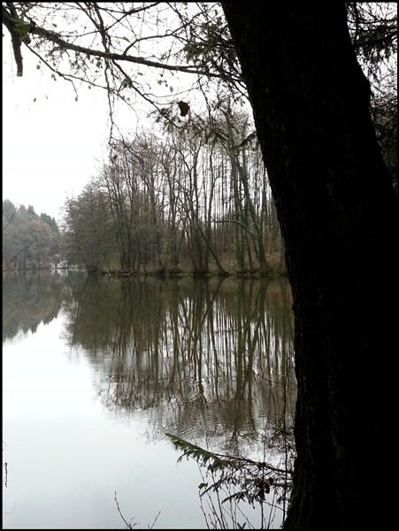 Weiher bei Ebersberg