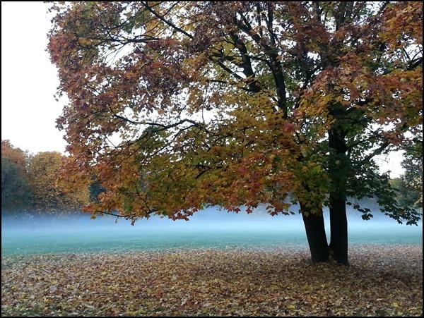 Herbst im Hirschgarten
