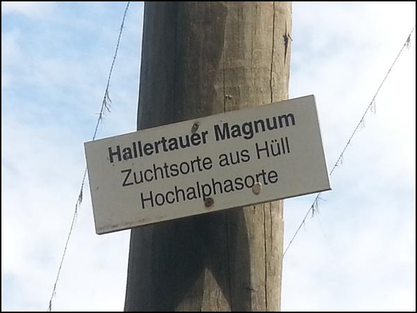 Hopfenwanderung Wolznach