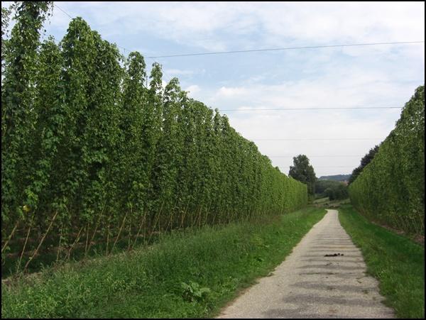 Hopfenwanderung in Bayern