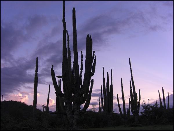 Fernweh-Freitag (1) Wüstenwanderung Baja California