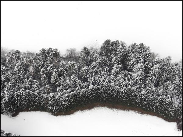 Wald und Wiesen von oben