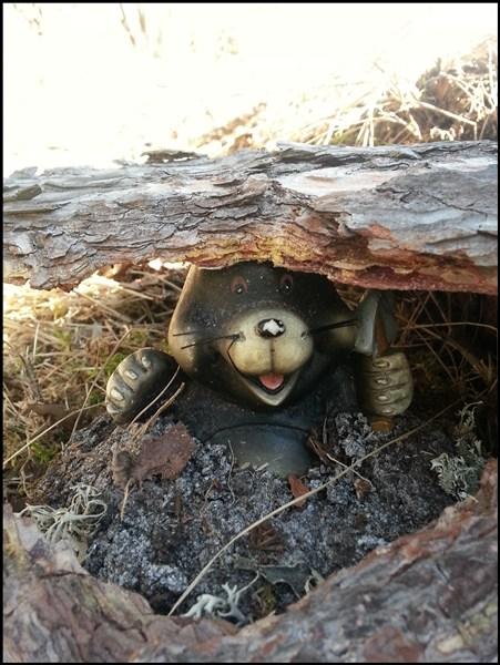 Waldbewoher Cache: der Maulwurf