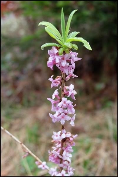 Frühlingsblumen am Geigelstein