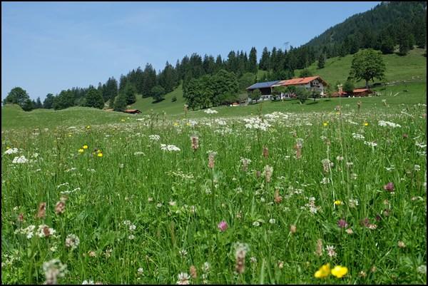 Siglhof bei Bayrischzell
