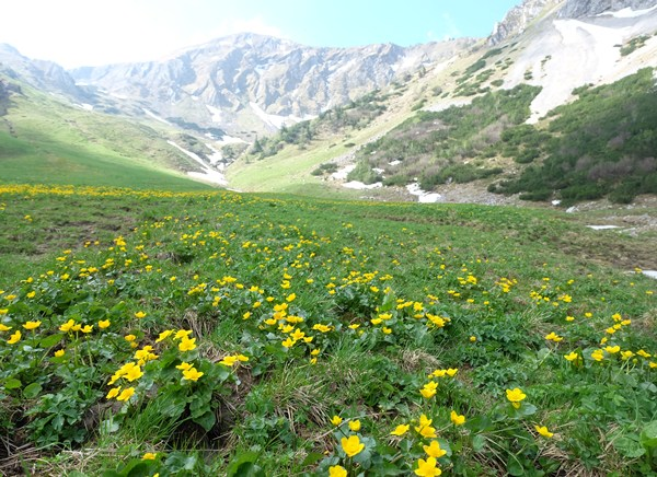 Wandern in den Tannheimer Bergen