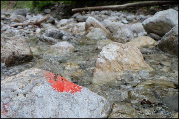 Schlucht in den Ammergauer Alpen