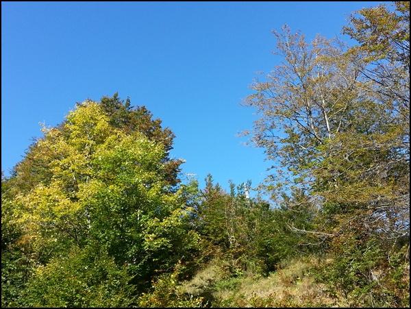 Am Ende der Wolfsschlucht: Herbstleuchten