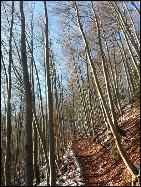 Im Wald am Bergbaumuseum