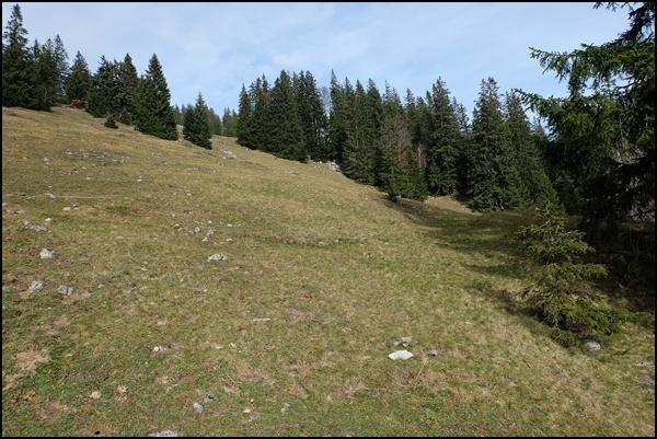 Almen und Wald im Chiemgau