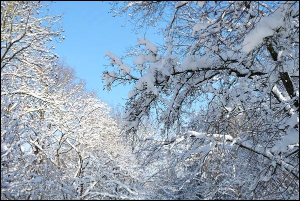 Winterzeit im Englischen Garten in München