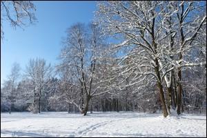 Schnee im Englischen Garten in München