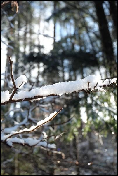 Winter im Werdenfelser Land zwischen Farchant und Partenkirchen