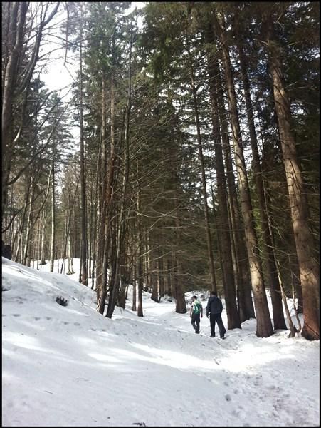 Schneelage (1) auf dem Weg von Sachrang zum Spitzstein (ab Parkplatz an der Kirche)