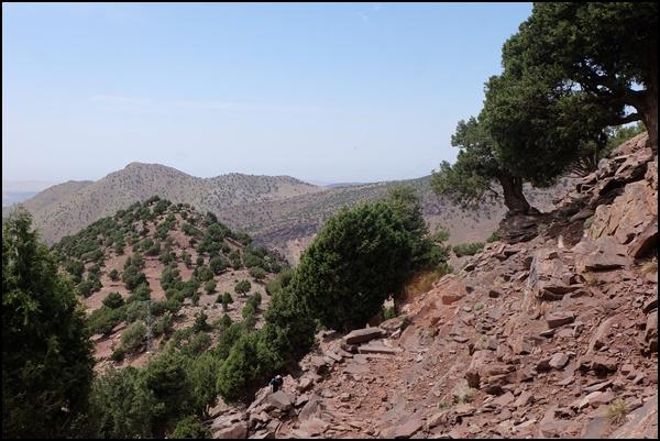 Wacholder in Marokko
