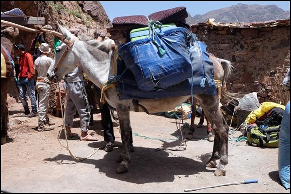 Muli in Marokko