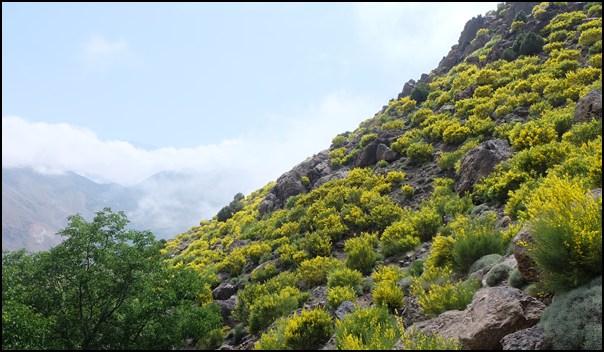 Blühendes Marokko