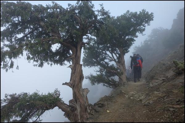 Nebel-Wald in Marokko