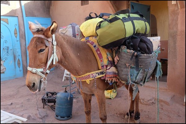 Gepäcktransport im Hohen Atlas in Marokko