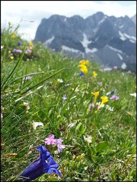 Blumen im Karwendel