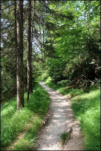 Waldweg zum Kramer