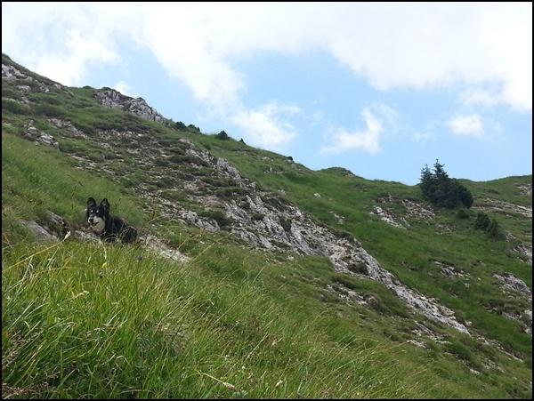 Wiese mit Hund im Karwendel