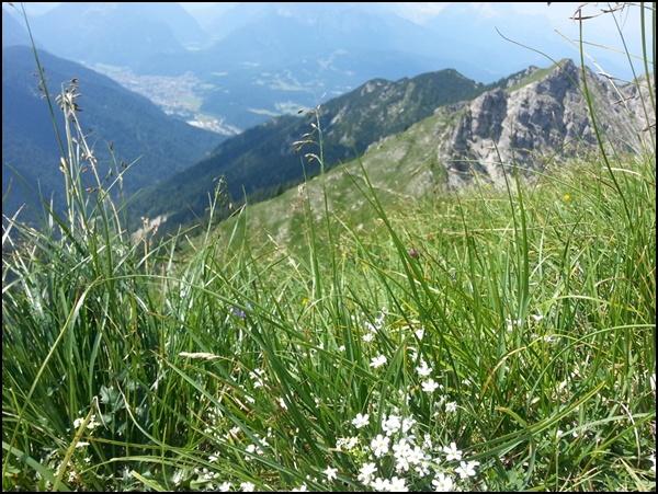 Blumenwiesen im Karwendel