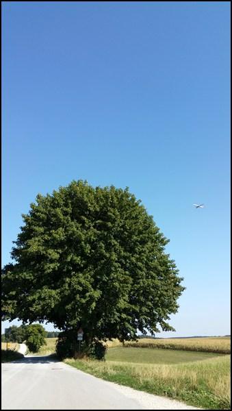 Baum...mit Flugzeug.