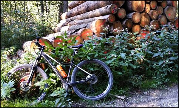 Mountain Biken für Anfänger (1): durch den Weltwald bei Freising