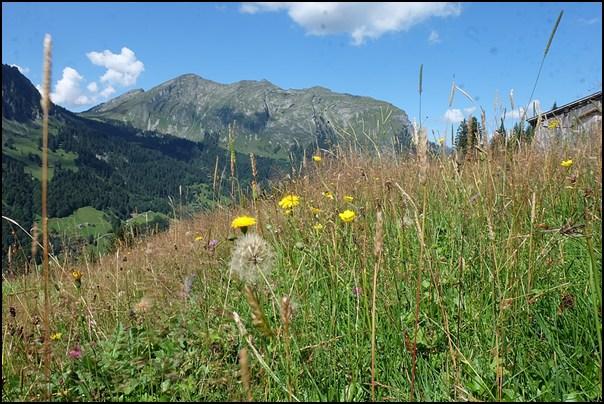 Blick zur Kanisfluh im Bregenzerwald