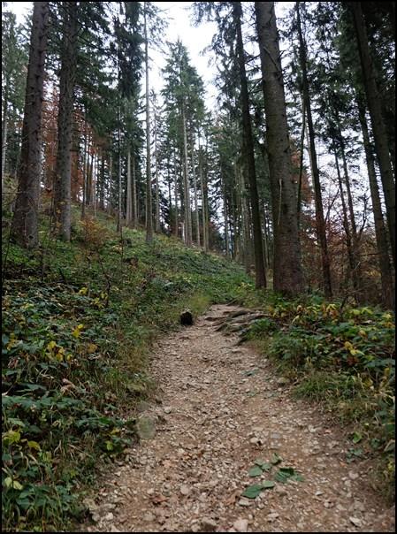 Im Wald zur Kampenwand
