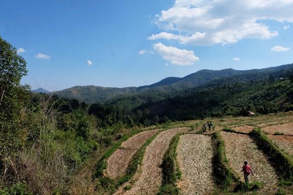 Im Mae Wang District im Norden von Thailand - wandern durch (abgeerntete) Reisfelder